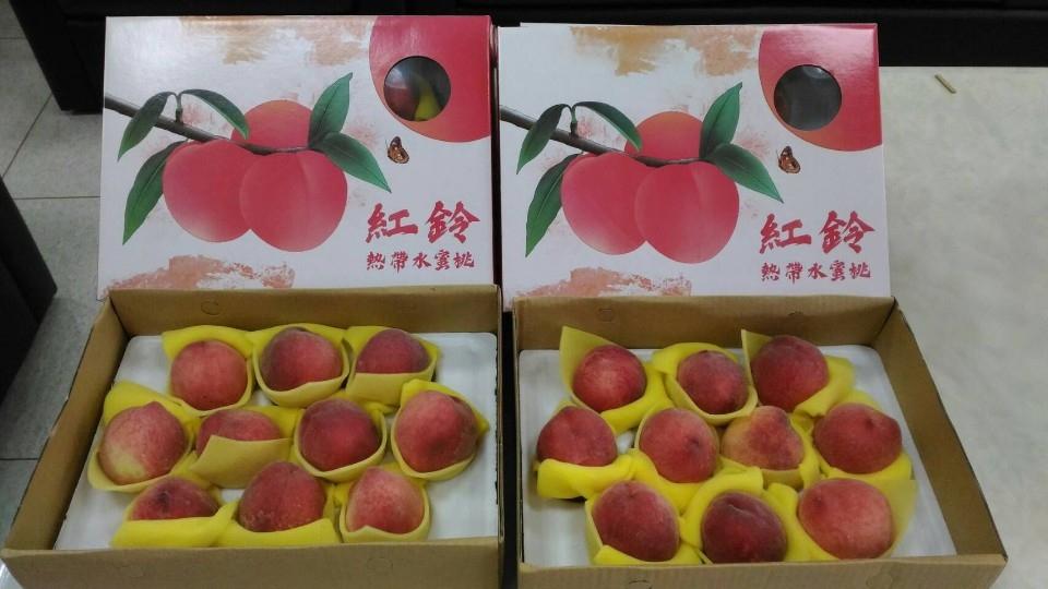 太平區農會新品種 「紅鈴水蜜桃」上市。(記者陳信宏翻攝)