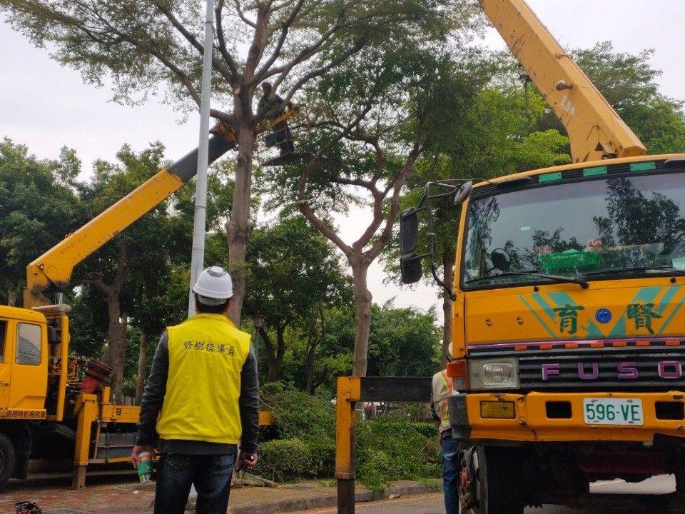 建設局啟動減災修剪作業。(記者劉明福翻攝)