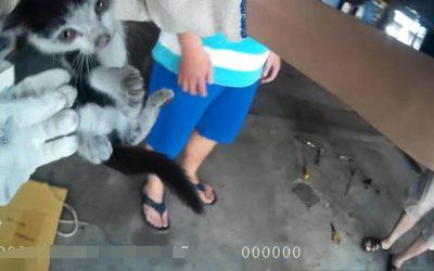 幼貓躲汽車底盤 警出手救援引歡呼。(記者林俊維翻攝)