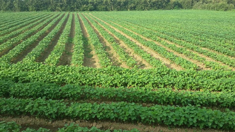 農業環境基本給付品項。(記者曾憲群翻攝)