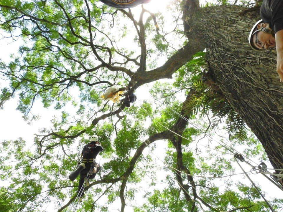 攀繩上樹救援 。(記者陳金泉翻攝)