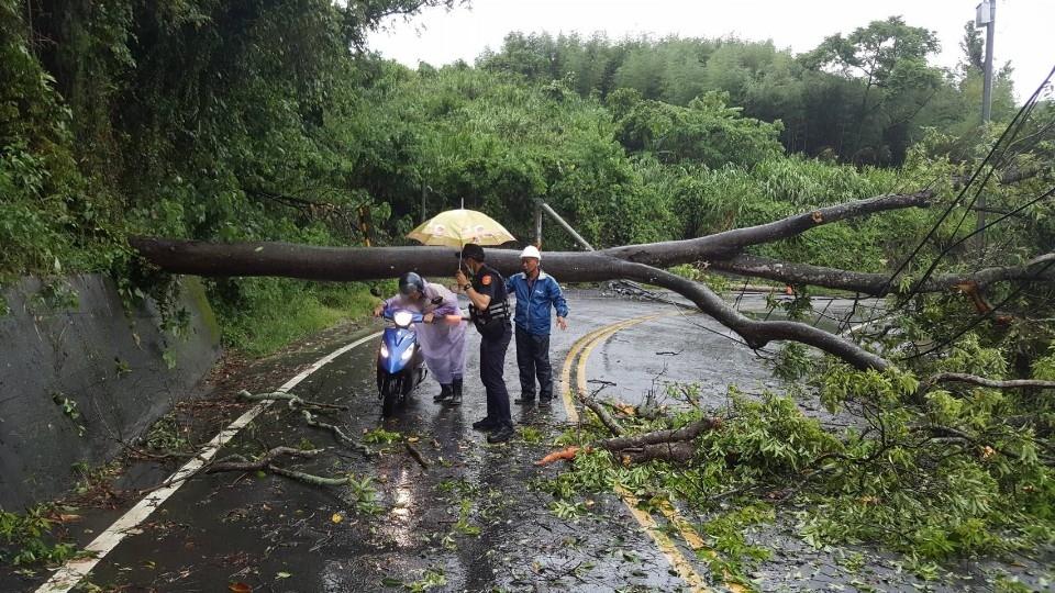電桿斷路樹倒 警急交通指揮。(記者張越安翻攝)